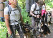 В Кавказском заповеднике туристов оштрафовали за прогулку с собаками