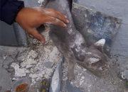 В Новороссийске спасатели вытащили кота из системы вентиляции гаража