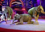 ВЦИОМ: более 40% россиян не поддерживают участие животных в цирке