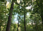 В Курганинском районе незаконно вырубили 400 деревьев на 22 млн рублей