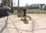 В сети появилась информация о том, что в Краснодаре отстреливают бездомных собак