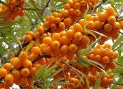 Эксперты рассказали о самых полезных фруктах и ягодах августа