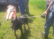 В Горячем Ключе собака привела полицейских к пропавшему пенсионеру