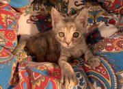 Краснодар вошел в топ-5 городов России, где больше всего любят кошек