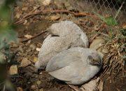 В сочинском дендрарии открыли сад с тропическими птицами