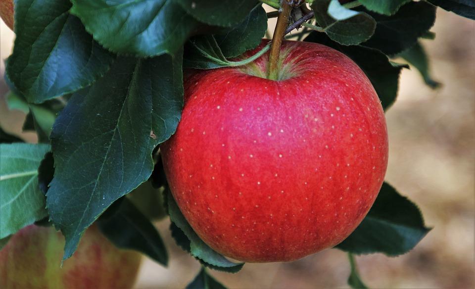 продукты защищают от рака
