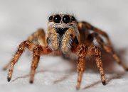 Злоба и агрессия: ученые выяснили, как на пауков действует жара