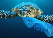 Спасти планету: восемь простых экопривычек