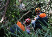 В Сочи на 70-летнюю женщину упало дерево