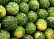 Арбузный сезон: стоит ли бояться нитратов в бахчевых?