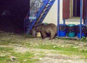 В Кавказском заповеднике медведь зашел на территорию туристического приюта