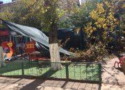 Мэрия Краснодара: известно о падении 20 деревьев