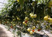 На Кубани 50 фермерских хозяйств получат гранты