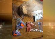 Гостья Сочи хранила килограмм наркотиков в пакете с кормом для собак