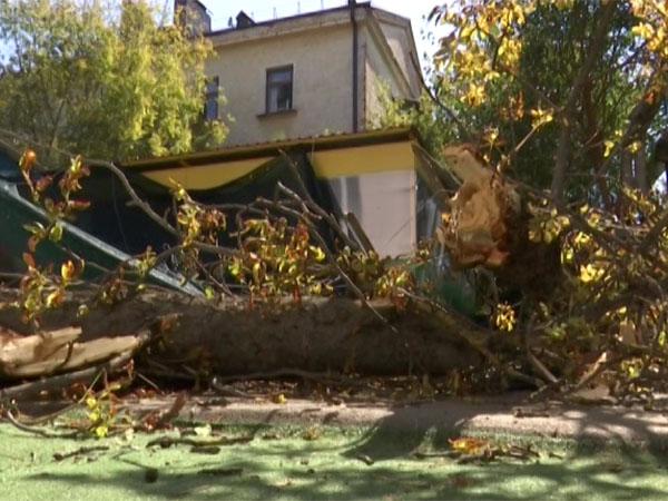 В Краснодаре следователи допросили сотрудников детсада, где рухнуло дерево