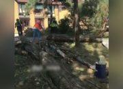 В Горячем Ключе ветер повалил дерево на линию электропередачи