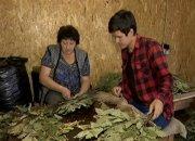 На «Кубанской ярмарке» гости смогут приобрести банные веники из Горячего Ключа