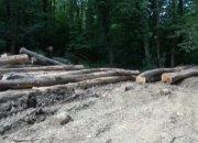 В Горячем Ключе мужчина незаконно срубил 30 дубов