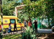 В Краснодаре из-за упавшего в детском саду дерева пострадали два ребенка