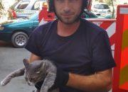 В Новороссийске спасатели эвакуировали кота с крыши
