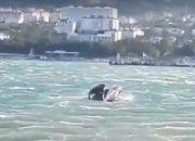 В Геленджике во время сильного ветра затонула яхта