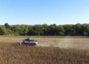 На Кубани при помощи авиации спасли кукурузу от мотылька