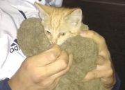 В Новороссийске спасатели вытащили котенка из ливневки