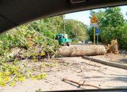 Сильный ветер повалил деревья в нескольких районах Кубани