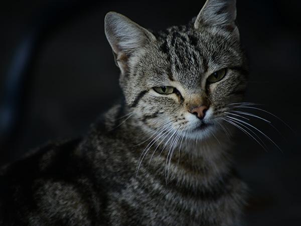Ученые сделали открытие, исследовав кошачьи «метки»