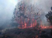 Под Новороссийском потушили лесной пожар