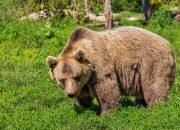 В Кавказском заповеднике туристы во время похода встретили медведя