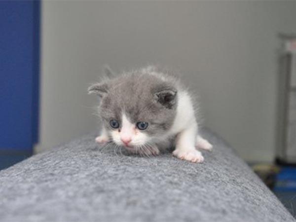 Генетический ляп: первый клон кота не похож на оригинал