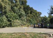 В Краснодаре поваленные деревья убирают по семи адресам
