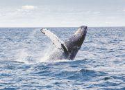 Ученые рассказали, о чем поют киты