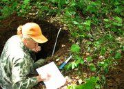 В Сочи после гибели самшита изменились влажность и состав почвы