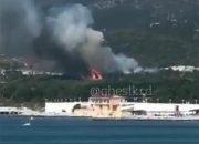 В Геленджике потушили пожар в лесу