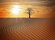 Новый сценарий катастрофы: ученые описали последствия потепления климата Земли