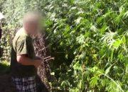 В Динском районе 58-летний наркоаграрий вырастил 1 тыс. кустов конопли