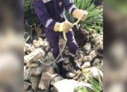 В Крымском районе в детский сад заползла змея, ее выгнали