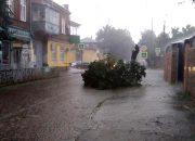 В Краснодаре дерево упало на трамвайные пути