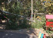 В Краснодаре деревья упали на территории четырех детских садов и двух школ