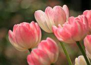 Лайфхак: как сохранить цветы свежими, напоив их водкой