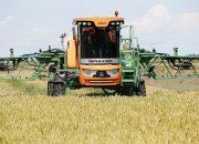 На Кубани аграрии приступили к уборке риса
