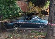 В Краснодаре дерево упало на автомобиль