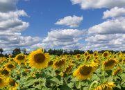 Совет директоров «АгроГард» признал эффективной работу агрохолдинга за полугодие