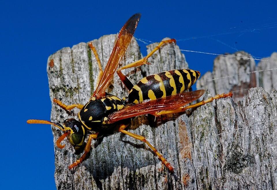 избавиться от осы