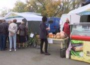 В Краснодарском крае начался сезон сбора тыквы