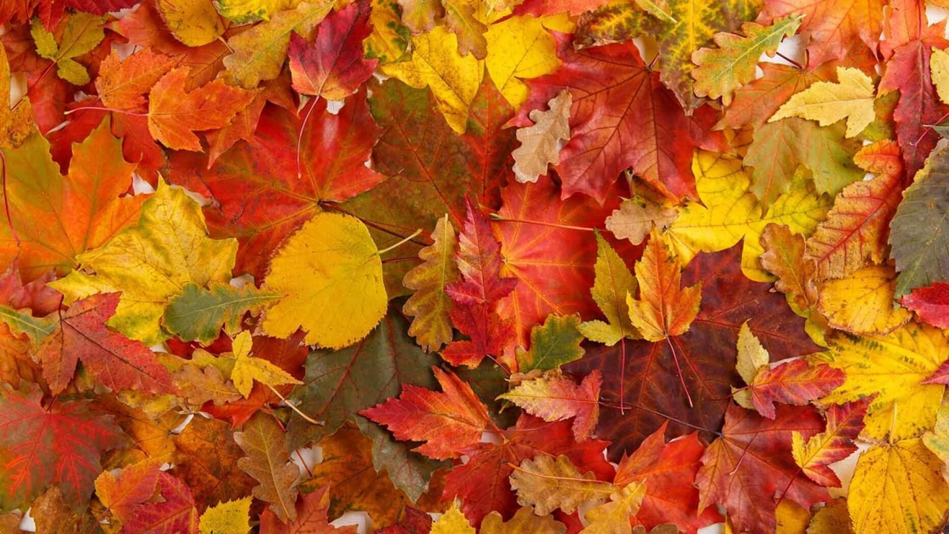 опавшие листья, убрать