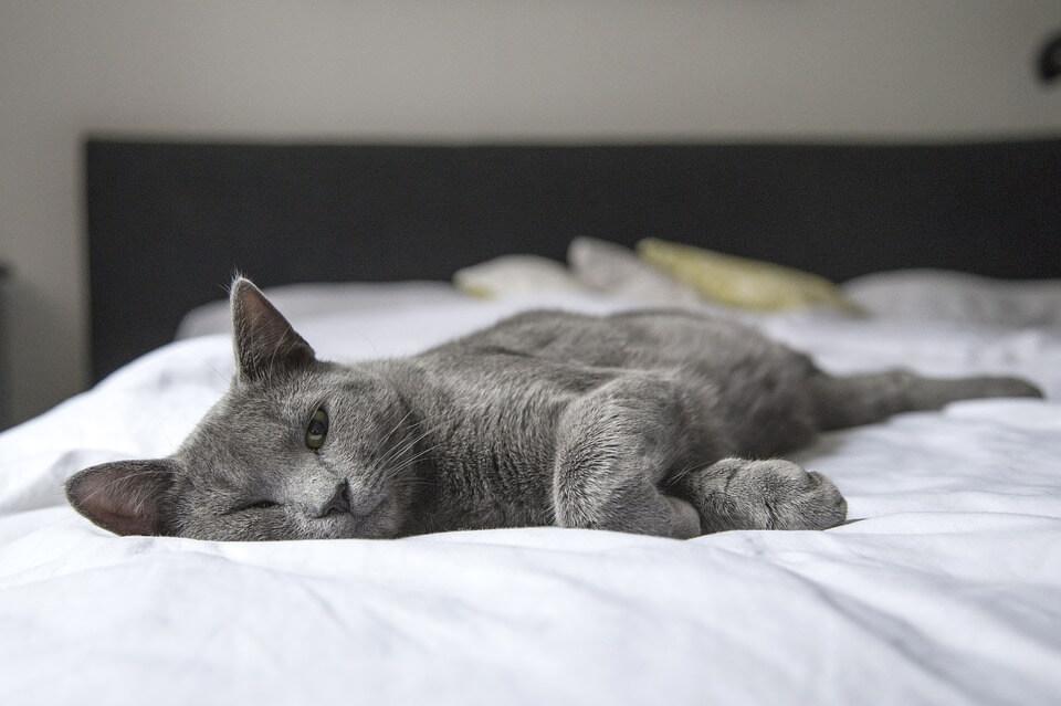 В постели с кошкой: домашние питомцы усложняют интимную жизнь людей
