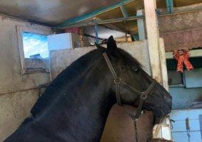 В Краснодаре при сносе гаражного кооператива нашли живую лошадь